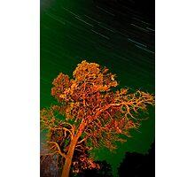 grampian tree Photographic Print