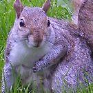 Squirrel by brendan harkom