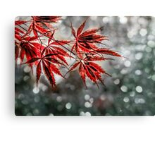 Japanese Red Maple Leaves  Canvas Print