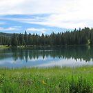 Island Lake by Vivian Sturdivant