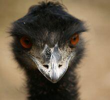 Emu by pbdz22