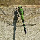 Dragonfly Shadow by Cynthia48
