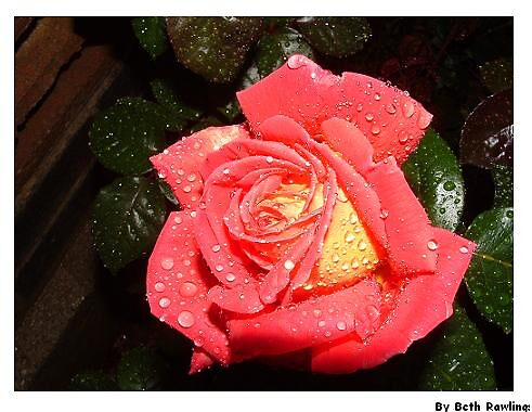 petal acid soak by elizabethrose05