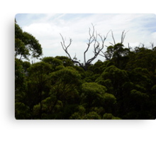 Above the canopy Canvas Print