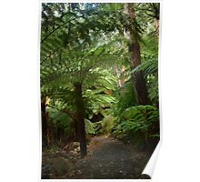 Tree Ferns, Otway Ranges Poster