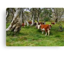 Mountain Cattle, Victorian High Country Canvas Print