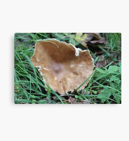 Butter Cap/Tough-shank. Canvas Print