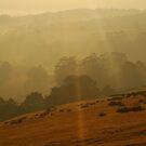 Otway Ranges Light by Joe Mortelliti