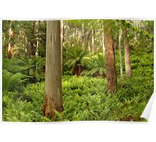 Ferns,Haunted Stream High Country Poster