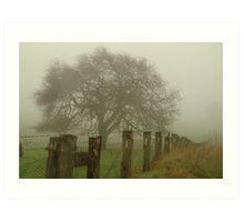 Foggy Morning, Macedon Ranges Art Print