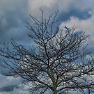 one tree and clouds by Joy  Rector