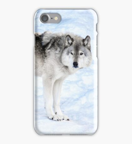 Oldest Wolf in the Pack_Timber Wolf iPhone Case/Skin