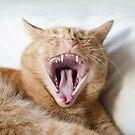 Big Yawn! by petegrev