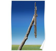 Old Telegraph Pole, Mallee rustic timber Poster