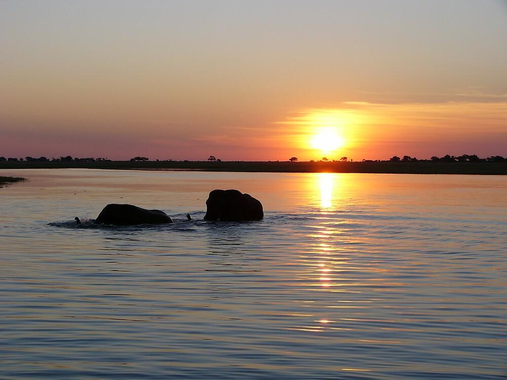 Elephants in the Botswana Sunset by Gerard Kennedy