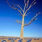 Coolibah Tree #01 by Jason Kimberley