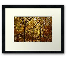 Autumn at Clunes Framed Print