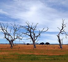 Three Trees by Helen  Page