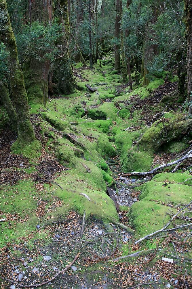Green path by Mark Williamson