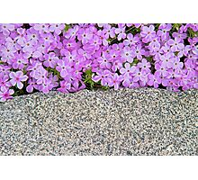 Colorful Contrast Photographic Print