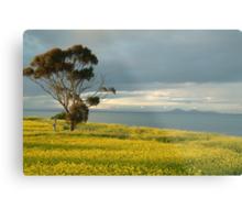 Golden Fields, Bellarine Peninsula Metal Print