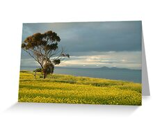 Golden Fields, Bellarine Peninsula Greeting Card