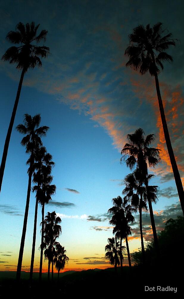 Sunset palms by Dot Radley