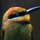 Rainbow Bee-Eater by Lance Leopold