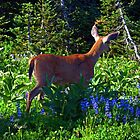Rainier Deer by Lynn Bawden