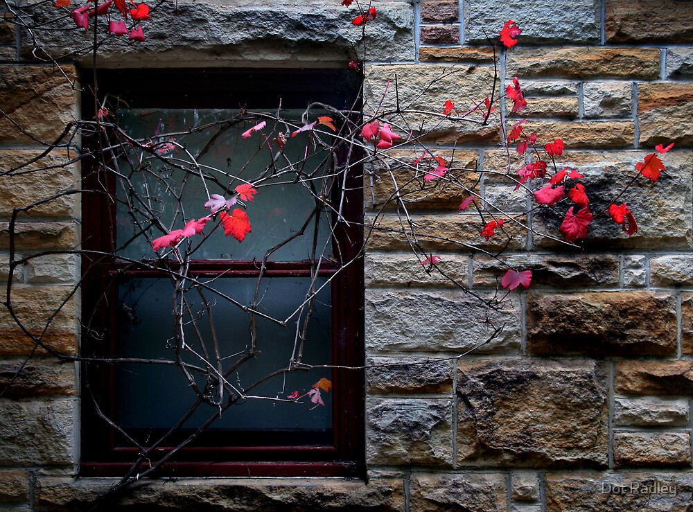Autumn Window by Dot Radley