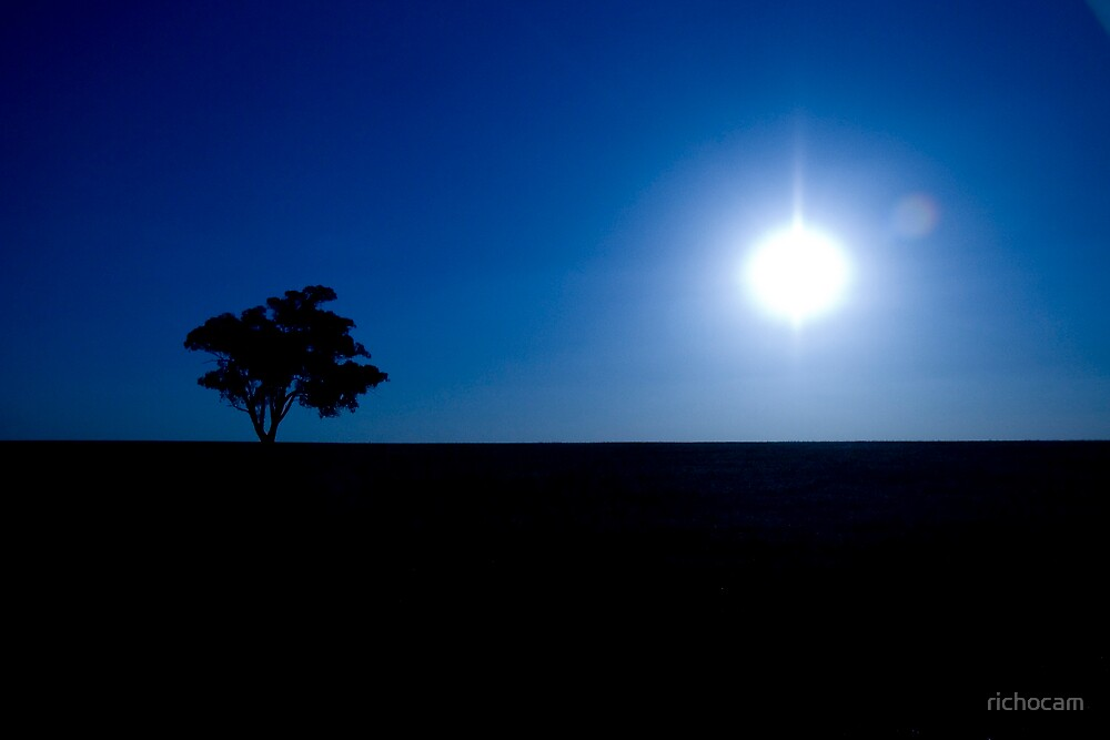 Lone Tree on Sunset by richocam
