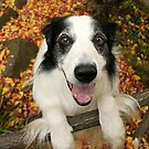 Cute Collie in Autumn by meg price