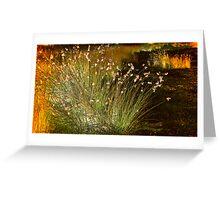Radiant Reeds Greeting Card