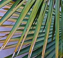 Crossed Palms by John Butler