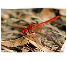 Red Dragonfly 4 Poster