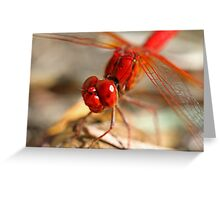 Red Dragonfly 7 Greeting Card