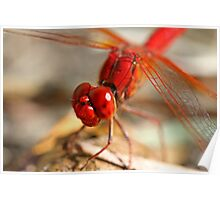 Red Dragonfly 7 Poster