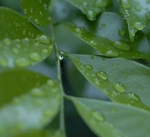 Green Leaves by Russell Hammond
