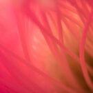 Cactus flower by kristin diemer