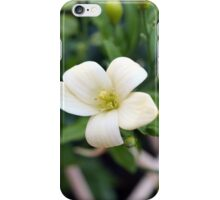 Mexican Orange Blossom iPhone Case/Skin