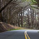 A Curve in the Road by John Butler
