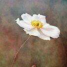 anemone by lucyliu