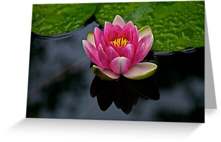Tranquility on the Pond by John Butler