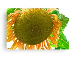 Super Sunflower Canvas Print
