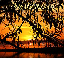 SUNREALISM by webgrrl