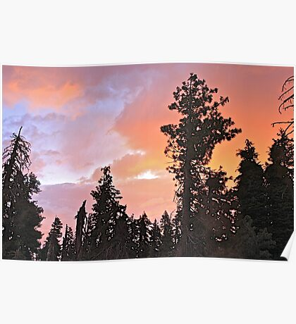 Forest Dawn Poster