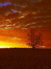 The Lone Tree by InfinityRain