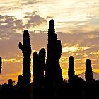 Cactus Sunrise by John Butler