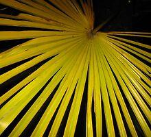 Palm Leaf by Charlotte Pitchford