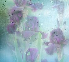 Iris In The Spring Rain by Diane Schuster